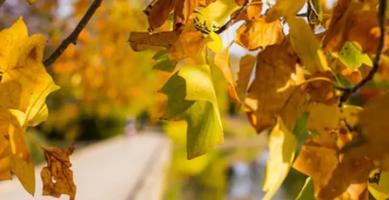 Leaf Collective Pilot Program Webinar